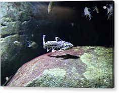 Fish - National Aquarium In Baltimore Md - 121298 Acrylic Print by DC Photographer