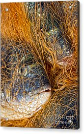 Fish On The Net Acrylic Print by Stelios Kleanthous