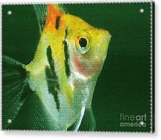 Acrylic Print featuring the photograph Fish Out Of Water by Nina Silver
