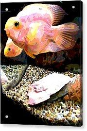 Fish Acrylic Print by Sarah E Kohara