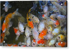 Fish Acrylic Print by Tonyah Nichols