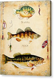 Fish Trio-c Acrylic Print by Jean Plout
