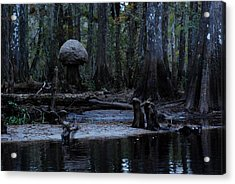 Fisheating Creek 26 Acrylic Print by Carol Kay