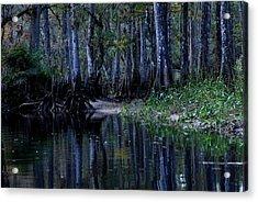 Fisheating Creek 29 Acrylic Print by Carol Kay