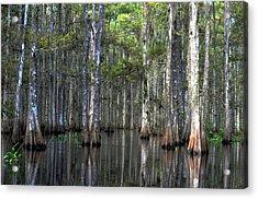 Fisheating Creek Acrylic Print by Bob Jackson