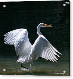Fishing Egret Acrylic Print