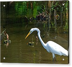Fishing For Food Wil 368 Acrylic Print