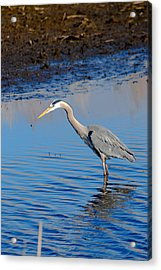 Acrylic Print featuring the photograph Fishing by Gary Wightman