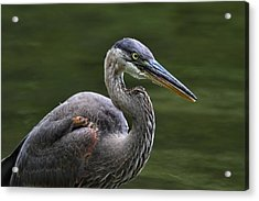 Fishing Acrylic Print by Mike Farslow