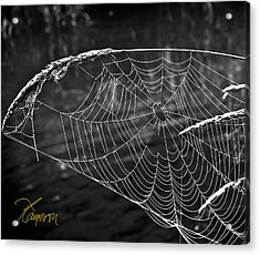 Fishing The Breeze Acrylic Print by Tom Cameron
