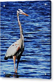 Fishing Acrylic Print by Will Boutin Photos