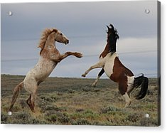 Acrylic Print featuring the photograph Fist Fight  by Christy Pooschke