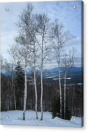 Five Birch Trees Acrylic Print