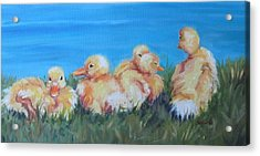 Five Ducklings Acrylic Print