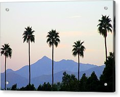 Five Palms Acrylic Print by Randall Weidner