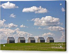 Five Sheds On The Alberta Prairie Acrylic Print by Louise Heusinkveld