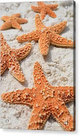 Five Starfish Acrylic Print by Carol McGunagle