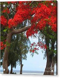 Flamboyant - Ile De La Reunion - Reunion Island Acrylic Print by Francoise Leandre