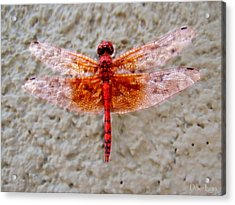 Flame Dragonfly  Acrylic Print