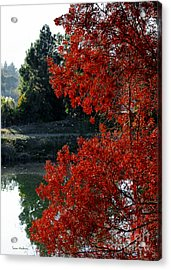 Flame Red Tree Acrylic Print