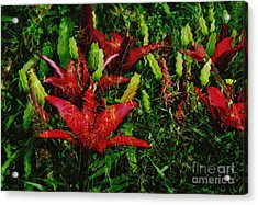 Acrylic Print featuring the photograph Flames by Kathie Chicoine