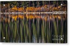 Flames Of Autumn Acrylic Print
