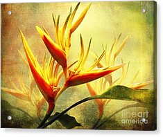 Flames Of Paradise Acrylic Print
