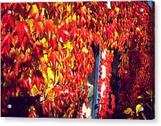 Acrylic Print featuring the photograph Flaming Autumn Leaves by Art Photography