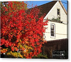 Acrylic Print featuring the photograph Flaming Fall Colours On Farm House by Nina Silver