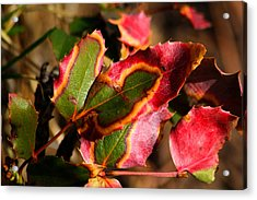 Acrylic Print featuring the photograph Flaming Leaves by Shane Bechler