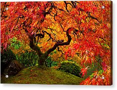 Flaming Maple Acrylic Print
