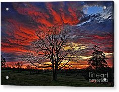 Flaming Oak Sunrise Acrylic Print by Reid Callaway