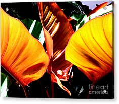 Acrylic Print featuring the photograph Flaming Plant by Kristine Merc
