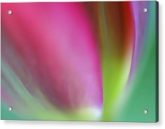 Acrylic Print featuring the photograph Flaming Tulip by Annie Snel