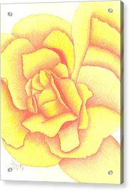 Flaming Yellow Rose Acrylic Print by Dusty Reed