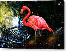 Flamingo 9 Acrylic Print by Dan Dennison