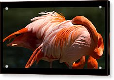 Flamingo Abyss Acrylic Print by John Kunze