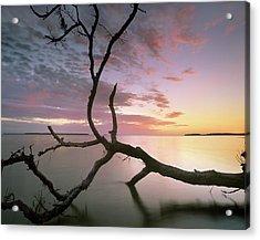 Flamingo Bay, Everglades National Park Acrylic Print