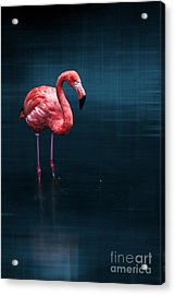Flamingo - Blue Acrylic Print by Hannes Cmarits