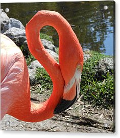 Flamingo By The Pond Acrylic Print