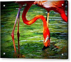 Acrylic Print featuring the photograph Flamingo by David Mckinney