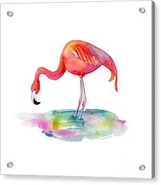 Flamingo Dip Acrylic Print
