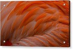Flamingo Feathers Acrylic Print