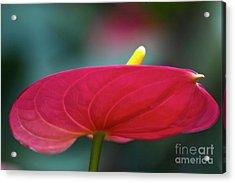 Flamingo Flower 1 Acrylic Print by Heiko Koehrer-Wagner