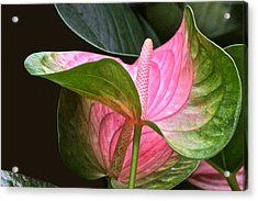 Flamingo Flower Acrylic Print