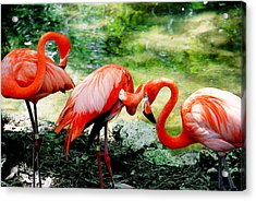 Flamingo Friends Acrylic Print