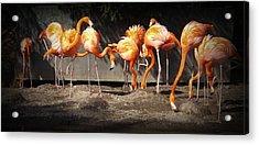 Flamingo Hangout Acrylic Print