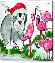 Flamingo Herder Acrylic Print