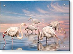 Acrylic Print featuring the photograph Flamingo Lagoon by Brian Tarr