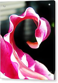 Flamingo Mona Lisa Curl Acrylic Print by Judy Via-Wolff